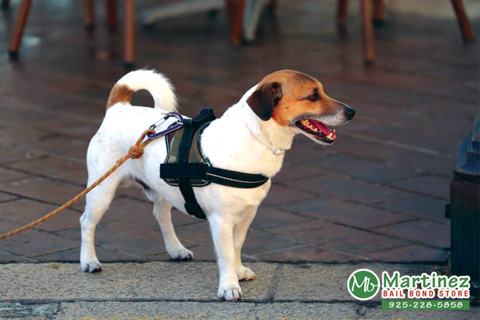 Does A Business Owner Have The Right To Deny A Dog Entrance?