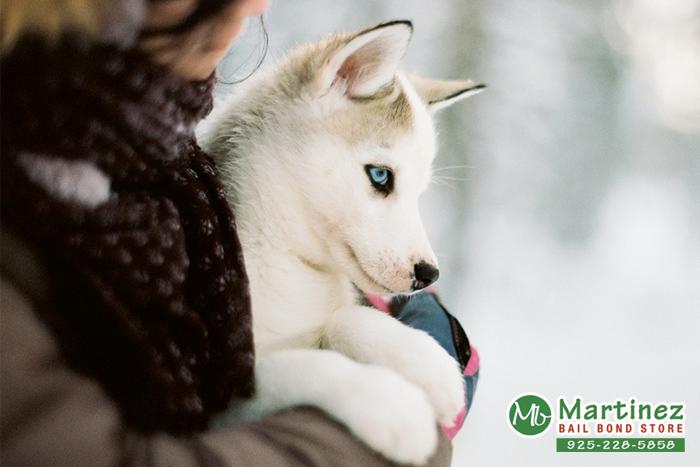 Winter Pet Tips